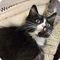Adopt A Pet :: Eric Clapton - Richboro, PA