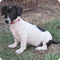 Adopt A Pet :: Snippet - Braintree, MA