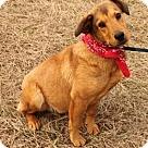 Adopt A Pet :: Teller
