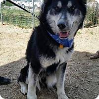 Adopt A Pet :: Boomer - Saskatoon, SK