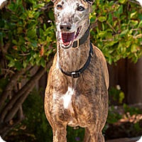 Adopt A Pet :: Danielle - Walnut Creek, CA