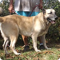 Adopt A Pet :: Max - Citrus Springs, FL