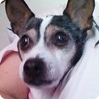 Adopt A Pet :: Helen - Conesus, NY