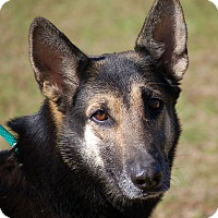 Adopt A Pet :: Punkin - Preston, CT