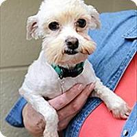 Adopt A Pet :: Ditto - Novato, CA