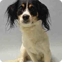 Adopt A Pet :: Oreo - Bernardston, MA