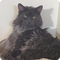 Adopt A Pet :: zz 'Pus' courtesy listing - Cincinnati, OH