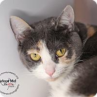 Adopt A Pet :: Cindy - Lyons, NY