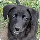 Adopt A Pet :: Barry B