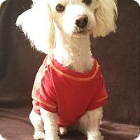 Adopt A Pet :: TOBY - Los Angeles, CA