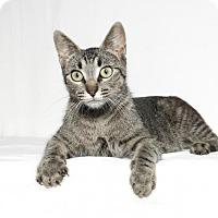 Adopt A Pet :: Athena - Lufkin, TX