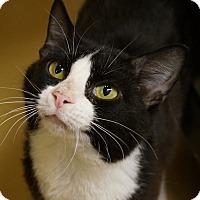 Adopt A Pet :: Milly - Monroe, GA