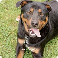 Adopt A Pet :: Javier - Columbus, OH