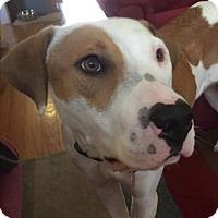 Adopt A Pet :: Milo- sweetest boy - Millbrook, NY