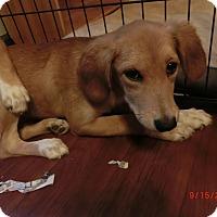 Adopt A Pet :: Vickie~ meet me! - Glastonbury, CT
