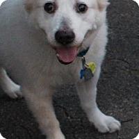 Adopt A Pet :: Elsie - West Des Moines, IA