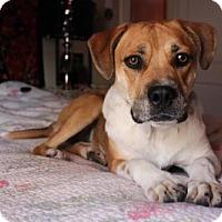 Adopt A Pet :: Athena - Denver, CO