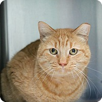 Adopt A Pet :: Morris - Warwick, RI