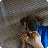 Adopt A Pet :: Topaz - Oviedo, FL