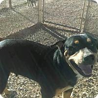 Adopt A Pet :: Nala - Post, TX