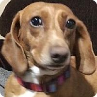 Adopt A Pet :: Jewel Joumou - Houston, TX
