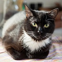 Adopt A Pet :: Pippi and Penny Paws - St. Paul, MN