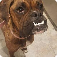 Adopt A Pet :: Filly - Woodbury, MN