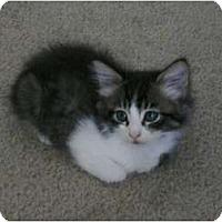 Adopt A Pet :: Matio - Brea, CA