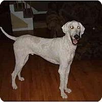 Adopt A Pet :: Skylar - Rigaud, QC