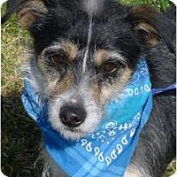Adopt A Pet :: Frankie companion - Sacramento, CA