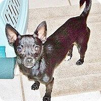Adopt A Pet :: PUCKETT - AUSTIN, TX