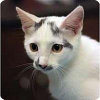 Adopt A Pet :: Junipurr - Chicago, IL