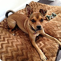 Adopt A Pet :: Buster - Culver City, CA