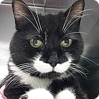 Adopt A Pet :: Moustache Mommy - Richboro, PA