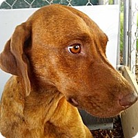 Adopt A Pet :: Tara - Williston, FL