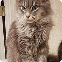 Adopt A Pet :: Jedidiah - North Highlands, CA