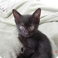 Adopt A Pet :: Indy - Southington, CT