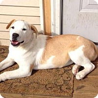 Adopt A Pet :: Sally - Morrilton, AR