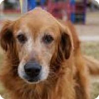 Adopt A Pet :: Beatrice - Denver, CO