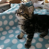 Adopt A Pet :: Buttons - Union, KY