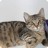 Adopt A Pet :: Colette - Hamilton, ON