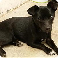 Adopt A Pet :: SKIPPY - Odessa, FL