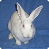 Adopt A Pet :: Sally - Woburn, MA