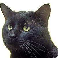 Adopt A Pet :: 284040 - Wildomar, CA