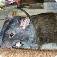 Adopt A Pet :: AMY and ABIGAIL - Philadelphia, PA