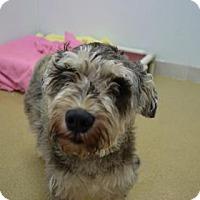 Adopt A Pet :: Jenga - Miami, FL