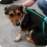 Adopt A Pet :: Paisley (Has Application) - Washington, DC
