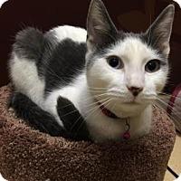 Adopt A Pet :: Blankito (foster care) - Philadelphia, PA
