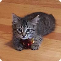 Adopt A Pet :: Shimmer - Kohler, WI