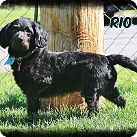 Adopt A Pet :: Rio - Shippenville, PA